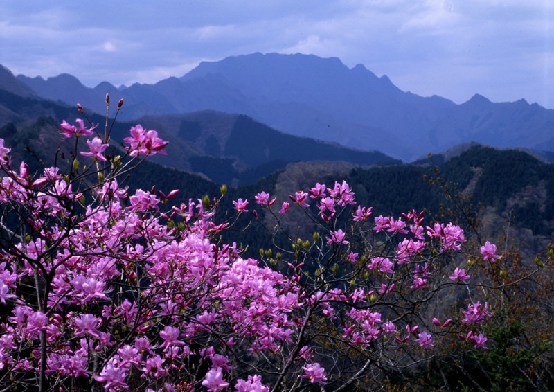 小鹿野温泉大竜寺源泉の写真