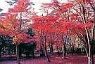 虹の郷 日本庭園