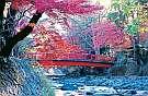 修善寺温泉街の紅葉