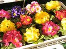 季節の花も販売しております。季節ごとに華やかですよ(●^o^●)