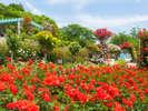 花巻温泉バラ園では6,000株を越えるバラが鮮やかに咲き誇ります。