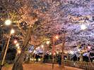 【栗林公園】春のライトアップ