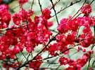 同じく『さくらの里』で咲く桃の花。