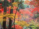 【金刀比羅宮 裏参道】表参道の賑やかさとは違う静けさの中の彩り