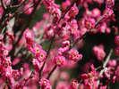 【熱海梅園】『梅まつり』