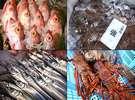 【食へのこだわり:鮮魚】黒潮にもまれた佐賀・玄海灘産の魚介は身も脂も一味ちがいます。