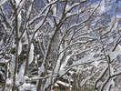 雪の積もった裏山の木々
