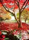 ■水月園(ぎん月から車で5分)の紅葉 春は桜が有名 四季折々の景色が楽しめます。