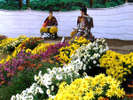 【秋】豪華な菊人形祭りは例年10月下旬~11月上旬横手市で開催。会場まで車10分程。