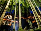 福井市美山森林温泉 自家源泉の宿 みらくる亭:回廊の木立を望めば、天の川が横たわる