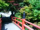 *夏*新緑と紅い橋の色合いが素敵です。