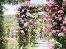 【バラ祭】非日常的空間!女性の憧れ『バラのアーチ』