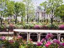 【バラ祭】2千品種、120万本のハウステンボス『バラ祭』
