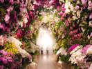 【大胡蝶蘭展】迫力満点『蘭のトンネル』は写真映えもバッチリな注目スポット!