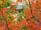 【12月頃のふなや庭園】正岡子規が『亭ところどころ渓に橋ある紅葉哉』と詠んだ絶景が楽しめます。