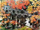 【東光寺紅葉】毛利家奇数代藩主の菩提寺です500基の灯籠に紅葉がとても綺麗です