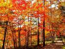 八千穂高原自然園の紅葉。見事な紅葉です。