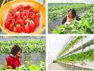 新鮮な果物がいっぱい。山梨県は果物王国です。