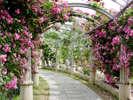 ハイジの村はホテルから車で約30分。美しい花がいっぱい!