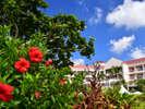 【外観】季節ごとに移ろう南国の花々も魅力です。