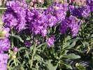 冬から春にかけて南房総はお花摘みがシーズンです♪海風と太陽の光を受けて育ったお花はとっても綺麗です♪