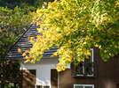 秋には絶景の紅葉もお楽しみください
