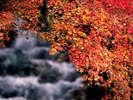 【秋の紅葉】自然いっぱいの十津川村は、紅葉も絶景!