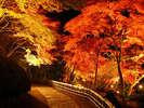 虹の郷 紅葉ライトアップ3