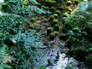 【庭園側和室B】杉木立の日本庭園を囲むように配置された純和風の1階もしくは2階の8畳か10畳の和室。
