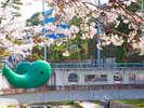 【桜並木】当館前にある勾玉橋。夜はライトアップされます!花柄浴衣を着て温泉街散策しよう!