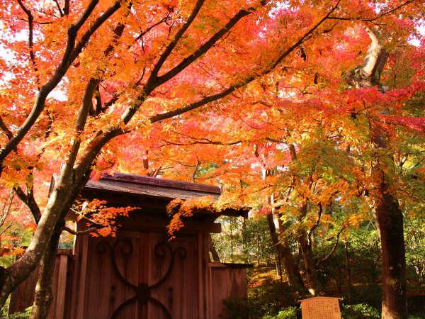 紅葉に彩られるMOA美術館