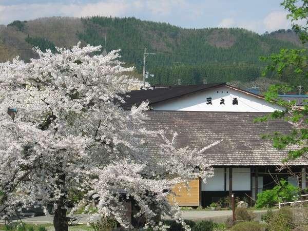 春の正面外観 桜とともに