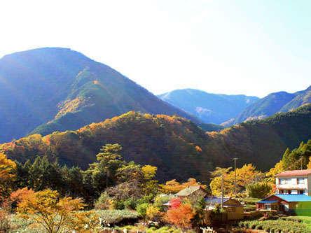 大野木の景色
