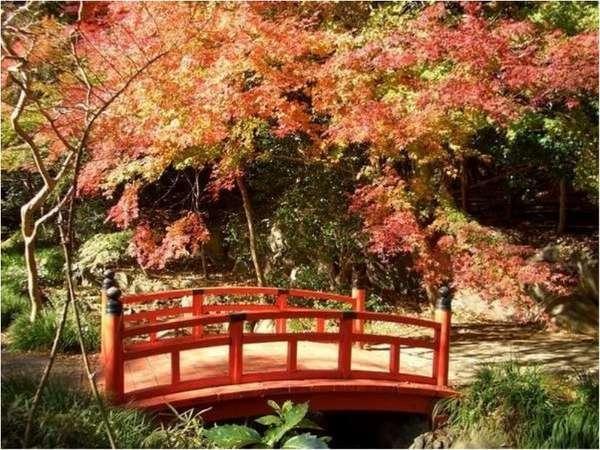 万葉公園の紅葉【11月下旬~】紅葉を眺めながら、園内をのんびりお散歩♪