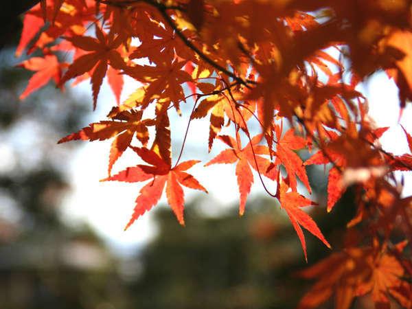 紅葉スポット多数!ぶどう狩りや秋の味覚に舌鼓!
