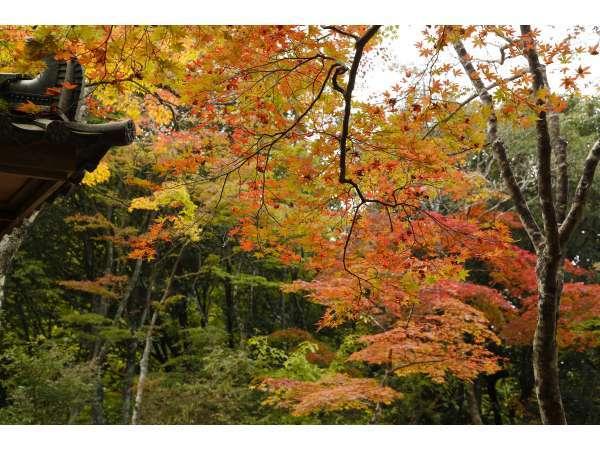 瑞宝寺公園の秋の紅葉8