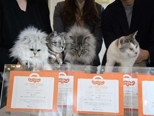 【猫のいるお宿 プチホテル・フロマージュ】可愛い4匹のニャンコとふれあえる至福の時間をどうぞ!