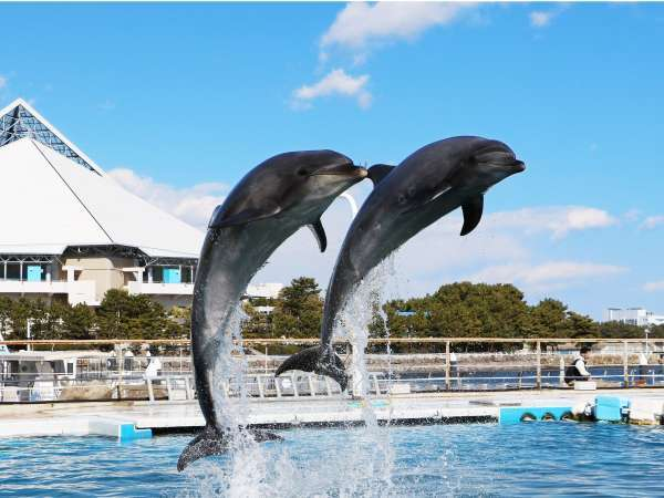 横浜・八景島シーパラダイスへ一番近いホテルです。夏の八景島はイベントが盛りだくさん!