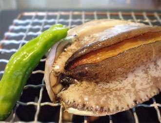 コリコリとした歯ざわりが特徴のあわび。刺身・踊り焼き・バター焼きなどお好みの食べ方でどうぞ