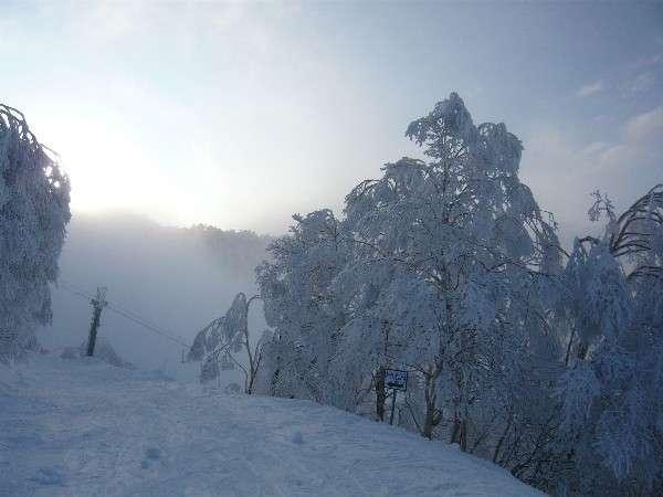 朝日で雪がキラキラ♪