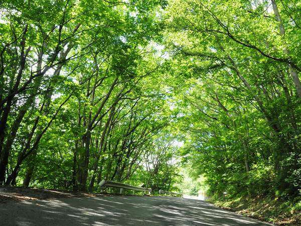 【長野県 美しい村の自然と癒しの宿 平野屋】お1人でのご滞在も大歓迎!
