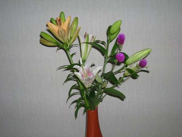 なじみのお客様の会津の自宅で咲いたかわいいお花です。