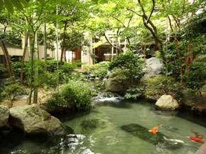中庭の池では、鯉が優雅に泳いでいます。純和風の庭園に癒されます。