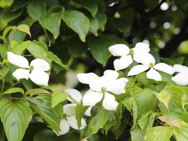 ■玄関先に咲く季節の花たち
