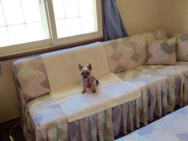 愛犬とお部屋でごゆっくりおくつろぎください