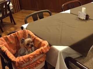 愛犬と一緒に楽しくお食事ができます。