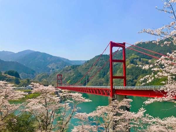 大渡ダム大橋と桜