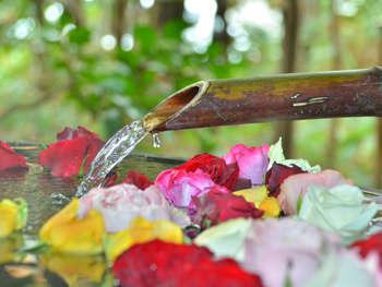 【バラ風呂】月に6日間だけ花開く・・・第1・第2・第3木&金曜限定
