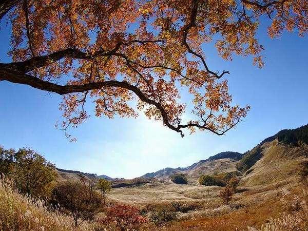 砥峰高原【秋】すすきで有名な砥峰高原です。