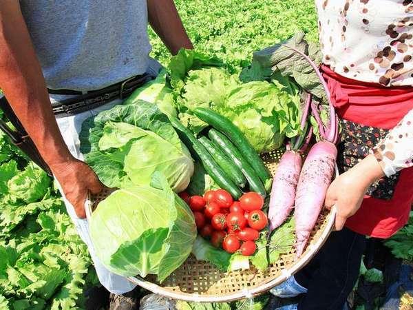 ■素材■群馬の高原野菜。大地と太陽の恵み、そして愛情から生まれた野菜。